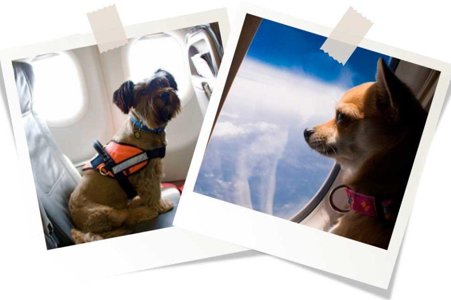 Правила перевозки собак в самолете