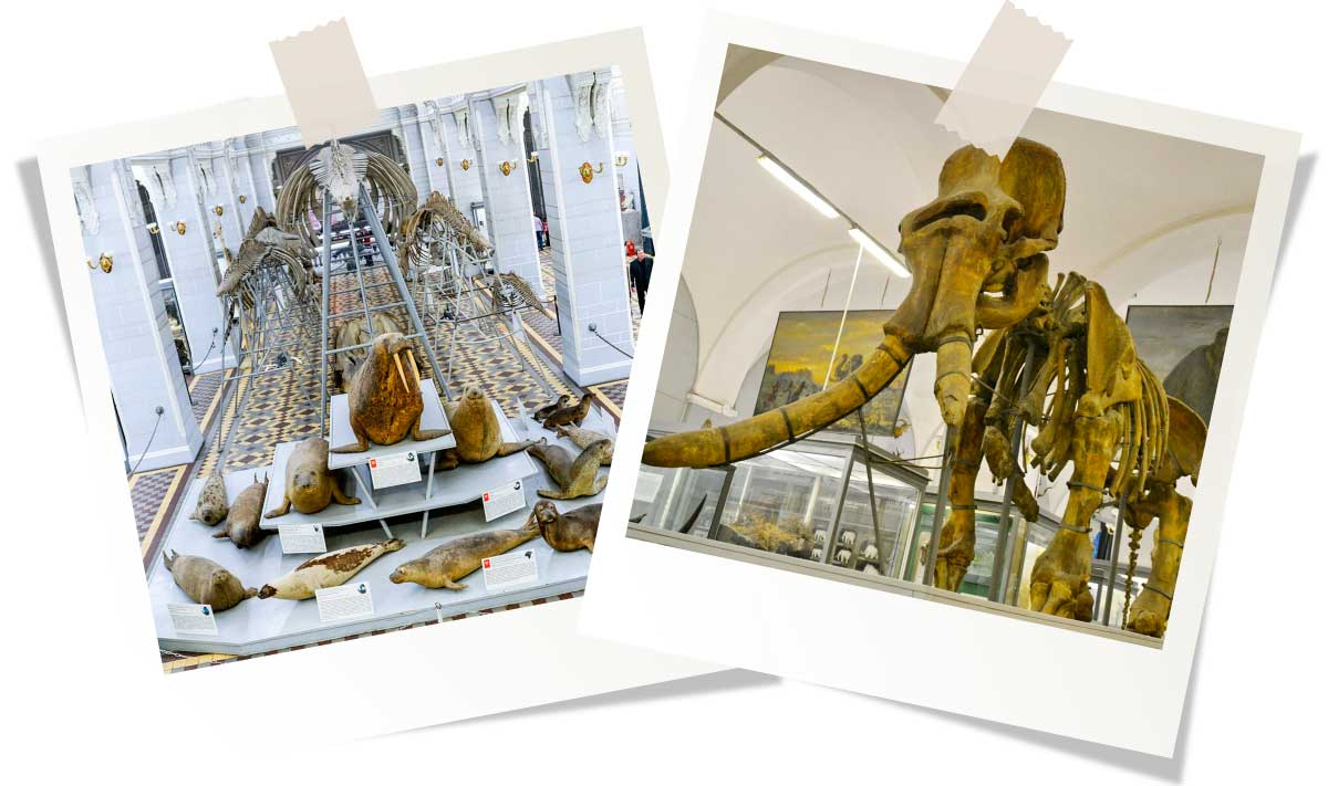 Достопримечательности Санкт-Петербурга: Зоологический музей